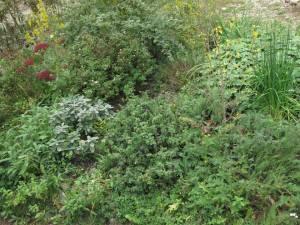 jesen5